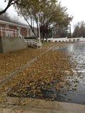 叶子在雨中 免版税库存图片