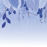 叶子在霜冬天背景中 库存图片