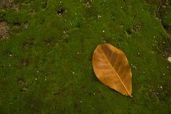 叶子在青苔的一片叶子 免版税库存图片