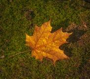 叶子在魁北克,加拿大落 库存照片