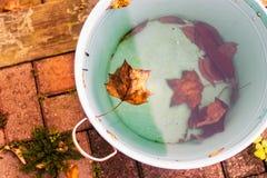 叶子在水中 免版税图库摄影