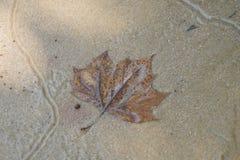 叶子在水中 免版税库存照片