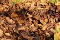 叶子在11月,秋天背景 免版税库存图片