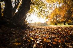 叶子地毯 免版税库存图片