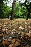 叶子地毯 免版税图库摄影
