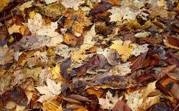 叶子堆 库存图片