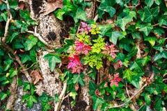 叶子墙壁树森林背景 免版税库存照片