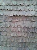 叶子墙壁 免版税库存照片