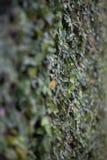 叶子墙壁  免版税图库摄影