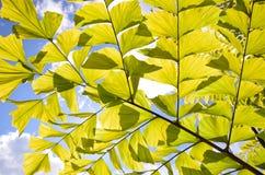 叶子墙纸;叶子纹理 图库摄影
