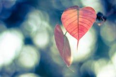 叶子墙纸 图库摄影