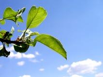 叶子夏天结构树 库存图片