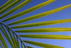 叶子天空 图库摄影