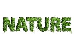 叶子字母表信件  叶子在白色ba隔绝的信件自然 免版税库存照片