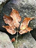 叶子干燥作为秋天来 免版税库存图片