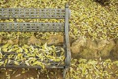 叶子废弃物在公园 库存图片
