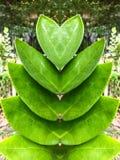 叶子心形在庭院里 免版税库存照片