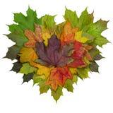 叶子心脏 库存照片