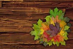 叶子心脏 库存图片