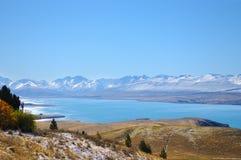 叶子或植物山白色雪的在冬天,天堂地方在新西兰 免版税库存照片