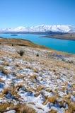 叶子或植物山白色雪的在冬天,天堂地方在新西兰 免版税图库摄影