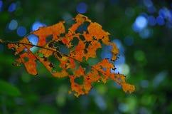叶子抽签蠕虫孔 图库摄影