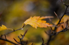 叶子接近在秋天 库存图片