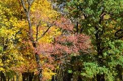 叶子改变在秋天seaso的肤色树的片段 库存照片