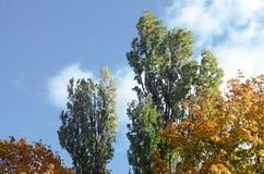 叶子改变在秋天seaso的肤色树的片段 图库摄影