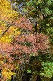 叶子改变在秋天seaso的肤色树的片段 库存图片