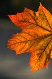 叶子明亮地发光了 库存照片