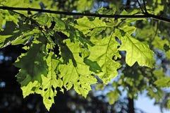 叶子星期日 库存图片