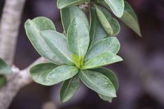 叶子是植物的重要组分 免版税库存照片