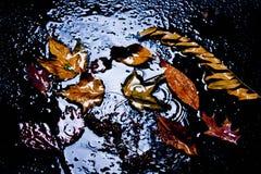 叶子是黄色的在一个水坑,在雨中 免版税库存图片