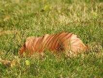叶子是死的 免版税库存图片