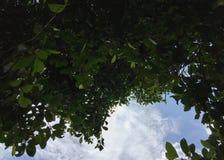 叶子有看见的空间蓝天和云彩后边 免版税库存图片