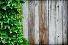 叶子木材通配藤的墙壁 库存图片