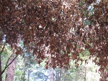 叶子枝形吊灯 库存照片