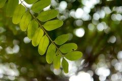 叶子枝杈 图库摄影