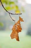 叶子枯萎了 库存照片