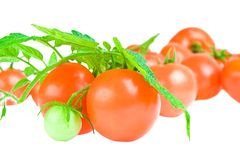叶子查出的蕃茄 免版税库存图片