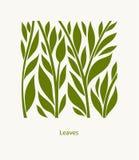 叶子标签摘要设计 方形的象 美丽的商标庭院 皇族释放例证