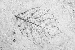 叶子标记在混凝土的 免版税库存照片