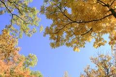 叶子树的上面 免版税图库摄影