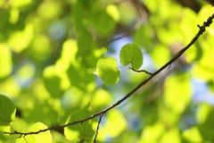 叶子树背景背后照明阳光 库存图片