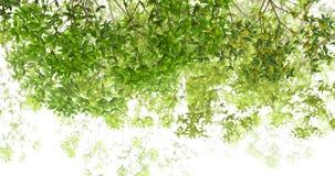 叶子树 库存图片