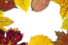 叶子框架在秋天颜色的 库存图片