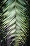 叶子棕榈树 免版税图库摄影