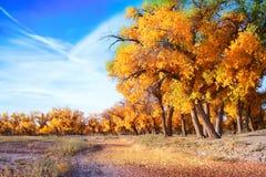 叶子森林横向照片 图库摄影