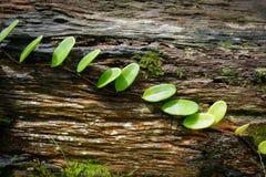 叶子植物 免版税库存照片